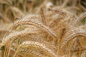 Vitamin with wheat germ